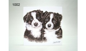 BORDER COLLIES/PU03/16X16CM/119