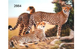 CHEETAH 3D PLACEMAT/51