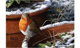 WINTER ROBIN/JPC04E/200X140MM/110