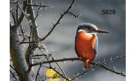 KINGFISHER/MDC04E/200X140MM/110