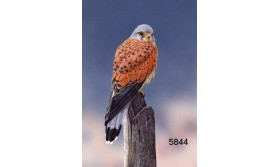 KESTREL/MDC38E/200X140MM/110