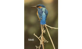 KINGFISHER II/MDC48E/200X140MM/110
