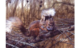RED SQUIRRELS/PAC42E/200X140MM/110