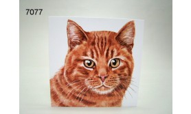 POES GINGER/ACEC13/16X16CM/119