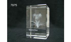 BLOEM/AGAPANTHUS 3D GLASBLOKJE/5X5X8CM/115