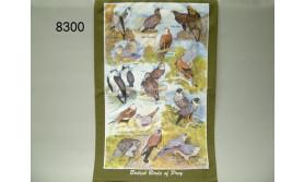 THEEDOEK BRITISH BIRDS OF PREY/88