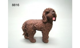HOND PS/LABRADOODLE/128